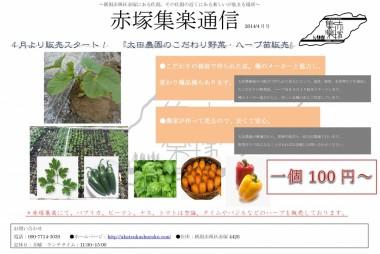 野菜苗販売チラシ